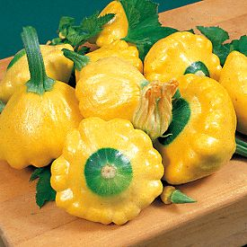 Beautiful Garden-Fresh Squash
