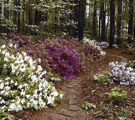 Gardenscene