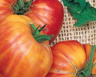 Big Rainbow Heirloom Tomatoes