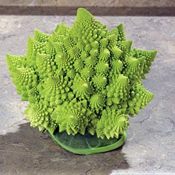 Park Seed collects unusual vegetables of all sorts, from monster vegetables and huge pumpkins to the truly weird, such as romanesco