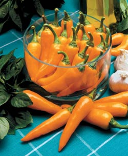 The Pepper Bulgarian Carrot is a great heirloom with lots of heat and a huge yield