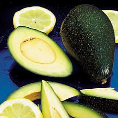 Avocado Don Gillogly avocado plant produces fruit year round when grown indoors