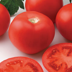 Tomato Applause Hybrid
